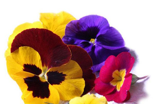 Fiori Eduli.Fiori Eduli O Fiori Commestibili Per Un Tocco Di Colore In Cucina